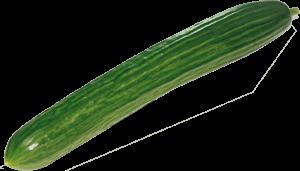 Gurken beim Hofladen Gutknecht-Gemüse