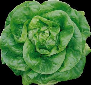 Salat beim Hofladen Gutknecht-Gemüse