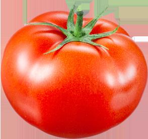 Gutknecht-Gemüse: Tomaten aus eigener Produktion